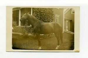 Antique RPPC photo postcard, horse in front of house