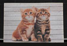 Mars & More Türmatte Fussmatte 2 Katzen Fotodruck Waschbar Polyester 74x50 cm