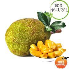 Jackfruit Bonsai Bonsai Seeds Plants Tree Organic Tropical Edible Garden