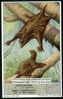 Flying Lemur NICE c60 Y/O Trade Ad Card