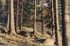 BF24272 paysage de l est la foret au soleil couchant france front/back image