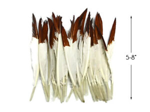 1 Pack - Brown Tipped White Duck Pointer Feathers 0.50 Oz. Imitation Eagle Hawk