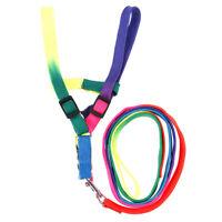 Adjustable Rainbow style Nylon Rabbit Cat Dog collar lead Harness goods for Pets