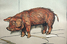 Cecil Aldin Print 1912 Baby Pig OUTCAST - Farm Animal Lithograph Print Matted