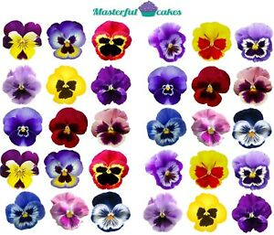 30 X PANSY FLOWERS EDIBLE RICE,WAFER ICING & PRECUT WAFER TOPPERS
