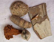 6PCS A lot of natural Marine organisms fossils Fish coral shellfish F94