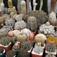 Cactus mix 20 seeds ( Approximate ) * Easy grow * Care free *