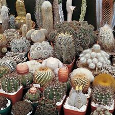 Cactus mix 20 seeds ( Approximate ) * Easy grow * Care free * CombSH C21