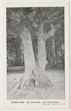 Hampshire postcard - Double Tree, Oak and Beech near Rufus Stone, New Forest