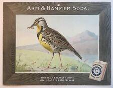 Birds - Arm & Hammer Advertising Store Display Card Sign - Meadowlark J5