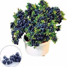 50Pcs Giant Blueberry Tree Seed Fruit Sweet Potted Bonsai Edible Plant Garden