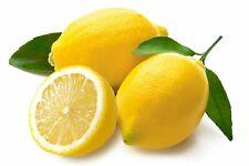 Lemon Fragrance Oil Soap Making Wax Melts Candles Bath Bombs