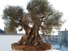 ULIVO SECOLARE  modellismo albero per presepi e diorama ARTIGIANALE  32 cm