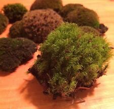 Beautiful Mixed Lot 10 Live Moss Plants Dollhouse Terrariums Dish Fairy Garden