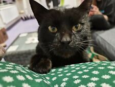 Please sponsor and help Roza at Sandbach Animal Rescue. Cat Rescue