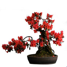 10pcs Rhododendron Seeds Home Garden Bonsai Flowers Plant