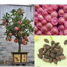 20pcs Red Apply Bonsai Apple Tree Seeds Garden Yard Outdoor Living Fruit Plant