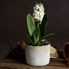 Artificial FLOWER & SUCCULENTS in pot House Plant greenery display