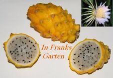 Drachenfrucht gelb @ Hylocereus triangularis @ Pitahaya @ Strauchkaktus@10 Samen