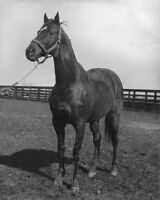 Champion Racehorse MAN O WAR Glossy 8x10 Photo Print Pose Thoroughbred Poster