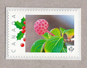KOUSA DOGWOOD BERRY = Picture Postage stamp MNH Canada 2016 [p16/02sn2]