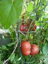 graines Tomates BRANDYWINE   15 semences méthode bio Tomato Seeds produit France