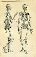 Framed Vintage Medical Print – Human Skeleton (Picture Poster Art Anatomy)