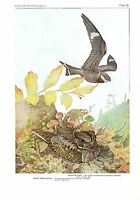 "1936 Vintage FUERTES BIRDS #65 ""WHIP-POOR-WILL, NIGHTHAWK Color Plate Lithograph"