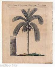 Palmen-Palme-Wachspalme-Botanik - Kupferstich - Bertuch 1800 Bäume