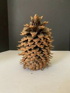Vintage Large California Coulter Pine Cone 9.5 inches Tall