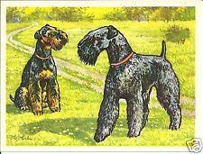 Rare 1952 Dog Art Print Austria Tobacco Company Bildwerk Card Kerry Blue Terrier
