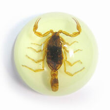 Scorpion paperweight in half dome resin glow in dark the real thing golde scary!