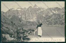 Aosta Gran San Bernardo Cane cartolina QQ5867