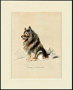 KEESHOND SEATED DOG CHARMING PRINT MOUNTED READY TO FRAME