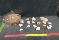 Lot Of 19 Sea Shells Mixed Lot Shells Seashells Aquarium Crafts Unpolished
