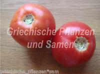 🔥 🍅 Zagola Tomate Tomaten aus Polen kältetolerant 10 frische Samen Balkon