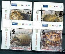 TESTUGGINI - TORTOISE  ARMENIA & WWF 2007