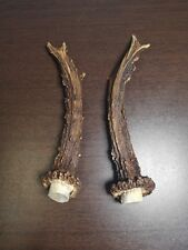 Small Pair of Roe Antlers For Art Design Decoration Knife Dagger Handles # 4064