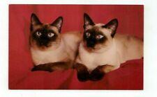 "Vintage Cat Kitten post card ""Sophisticates of Siam"""