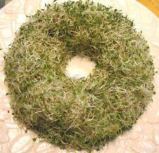 Apio keimsaat semillas para keimsprossen 150 gramos