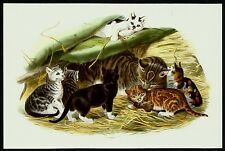 WILDCAT (Felis silvestris), Monograph of the Felidae, by Daniel Giraud Elliot