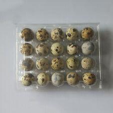 50pcs Quail Egg Holder Tray 20 Eggs Secure Snap Close Plastic Box Container Acc