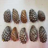 "Knobcone pine knob cone natural 3"" Lot of 10 Third Eye Jewelry Craft rare"
