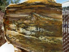 RFM - PETRIFIED WOOD Unique Dendrite Picture Wood Scenic Grain Patterns Slab