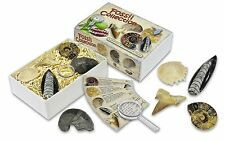Junior Fossil Collection Box ammonite Shark tooth sea urchin & more fossils