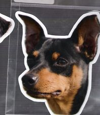 Mini Pinscher 4 inch face magnet for car or anything metal     New