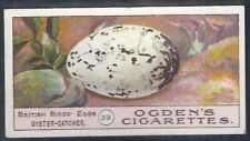 OGDENS-BIRDS EGGS 1908-#39- OYSTER CATCHER EGG