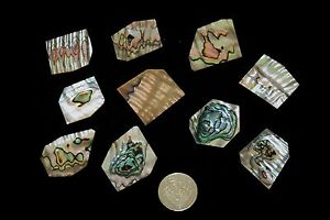 10 pcs CALIFORNIAN  ABALONE mother of pearl