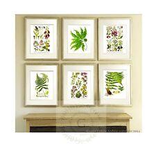 Wild Flowers Antique Fern Prints set of 6 Botanical Wall Hanging Art Decor