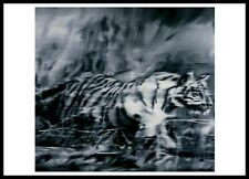 Gerhard Richter Kunstkarte Postkarte nicht signiert